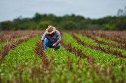 28 de Julho: Dia do Agricultor