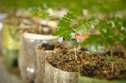 Prefeitura de Belo Horizonte pretende assinar Protocolo de Intenções para plantio de 100 mil àrvores