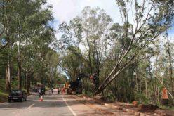 Remoção de árvores na BR-040