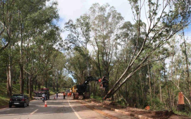 Remoção de árvores as margens da BR-040