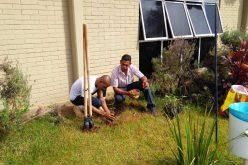 Plantio de Leguminosa que ajuda no combate biológico do Aedes Aegypti está sendo realizado em Sete Lagoas