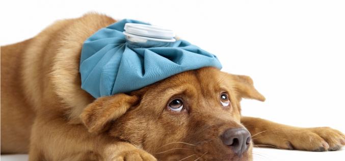 Doenças respiratórias mais comuns nos cães