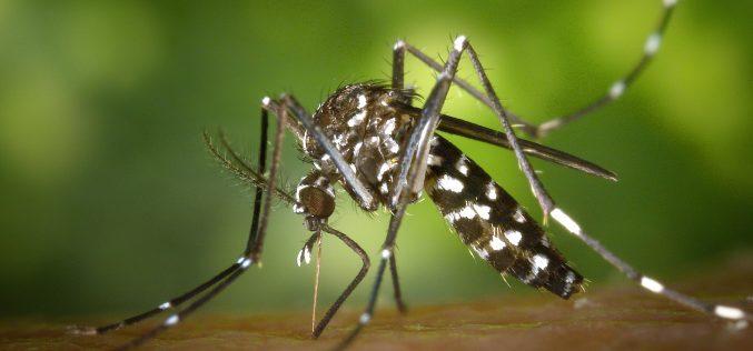 Sete Lagoas bate recorde de combate e prevenção à Dengue