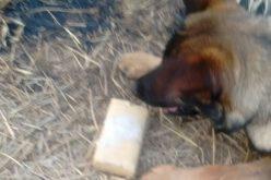 Com auxílio de cães farejadores, Polícia Militar prende traficante em Inhaúma