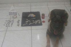 Polícia Militar prende traficante no bairro Itapuã com auxílio de cão farejador