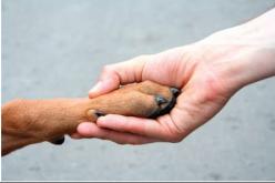 10 dicas para cuidar do pet