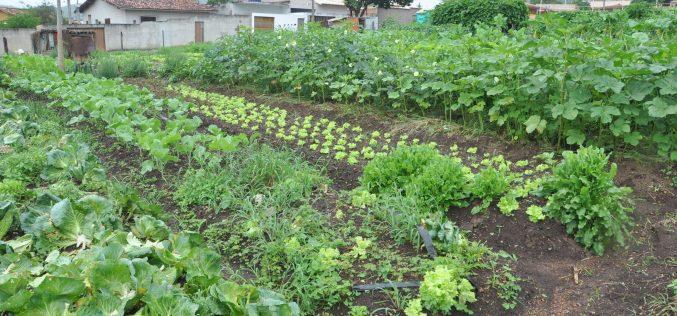 Com apoio da Prefeitura, programa de hortas comunitárias completa 35 anos fortalecido