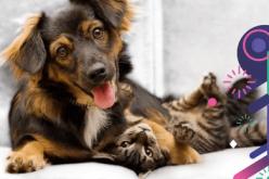 Feliz Ano Todo: Vou adotar um pet!