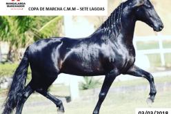 Copa de Marcha do cavalo Manga-larga marchador em Sete Lagoas