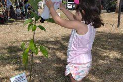 Prefeitura incentiva plantio de árvores na Praça da Feirinha