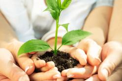 APL para sustentabilidade ambiental nas escolas passa na Câmara