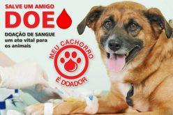 14 de junho: Dia Mundial do Doador de Sangue