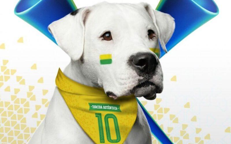 Cuidados com os pets durante os jogos da Copa do Mundo