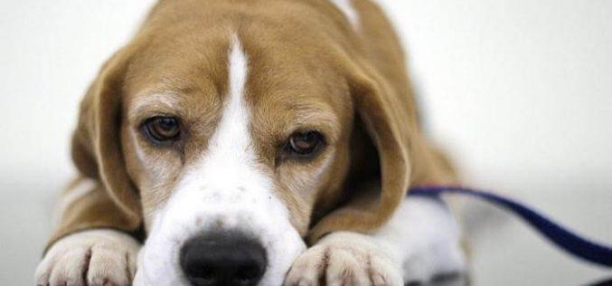 Saiba quais são os perigos invisíveis para a saúde do seu cão