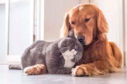 Campanha já vacinou mais de 40 mil cães e gatos em Sete Lagoas