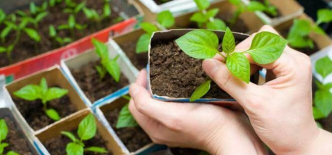 Faça você mesmo: Que tal ter uma horta orgânica em casa?