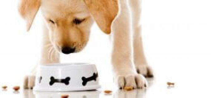 Entenda porque esconder o alimento de seu cachorro traz benefícios para saúde dele