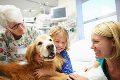 Benefícios da Pet Terapia