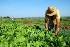 Ato em BH vai reunir 10 mil trabalhadores rurais contra a reforma da previdência