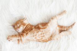 Alimentação x sono : Alimentos que ajudam a dormir melhor