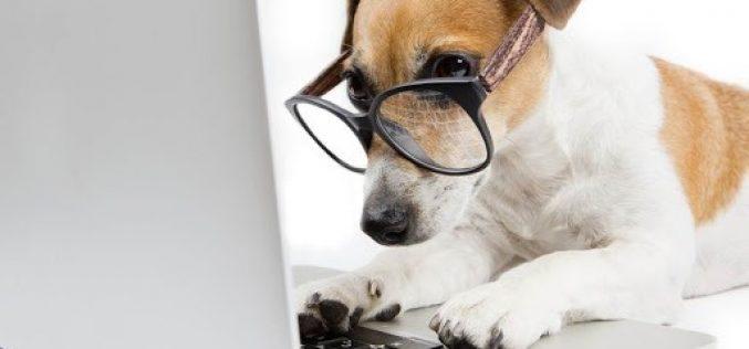 Agendamento de castração gratuita de cães e gatos já pode ser feito online em Sete Lagoas