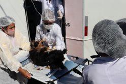 Mutirão de castração gratuita de cães e gatos tem estreia do Castra Móvel